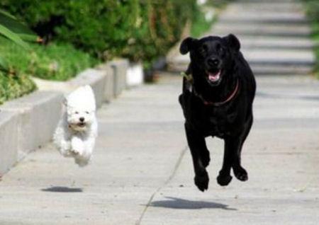 25-Pet-Dogs